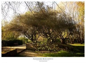 Idées de photos de couple ou photos de mariage : le parc floral de Bordeaux - Alexandre Roschewitz Photographies